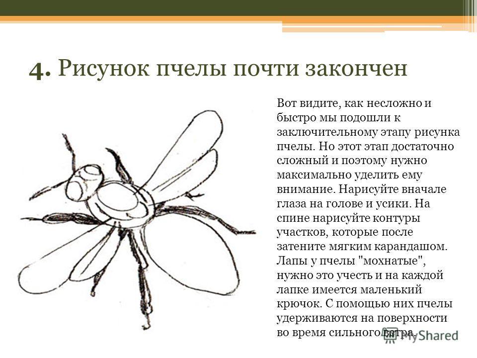 4. Рисунок пчелы почти закончен Вот видите, как несложно и быстро мы подошли к заключительному этапу рисунка пчелы. Но этот этап достаточно сложный и поэтому нужно максимально уделить ему внимание. Нарисуйте вначале глаза на голове и усики. На спине