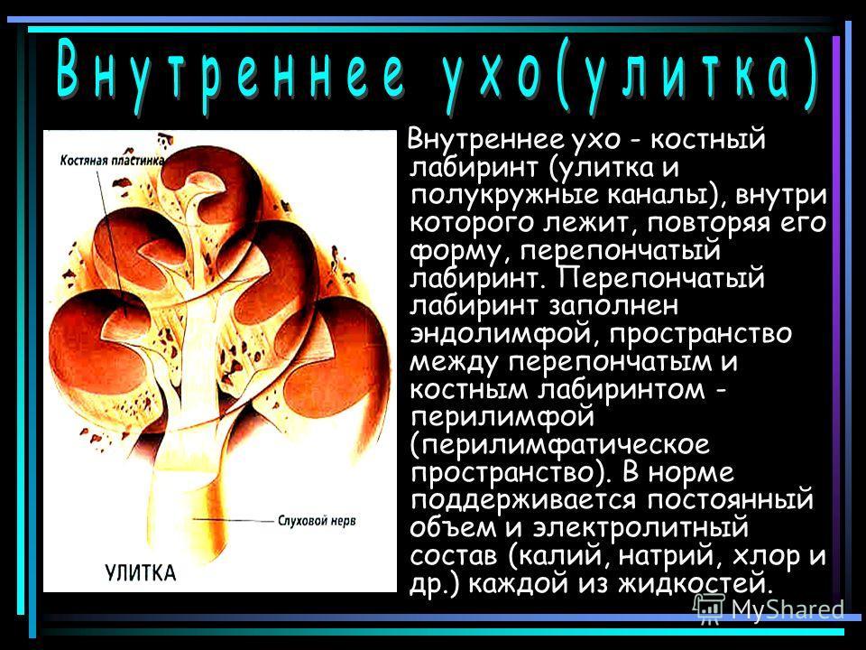 Внутреннее ухо - костный лабиринт (улитка и полукружные каналы), внутри которого лежит, повторяя его форму, перепончатый лабиринт. Перепончатый лабиринт заполнен эндолимфой, пространство между перепончатым и костным лабиринтом - перилимфой (перилимфа