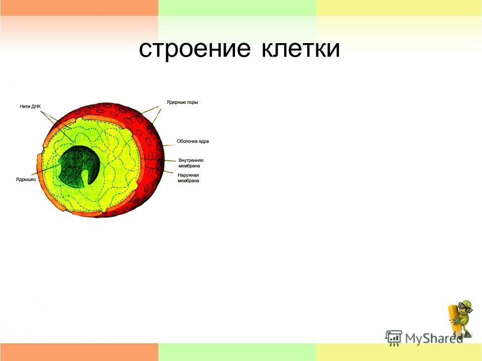 строение клетки 1