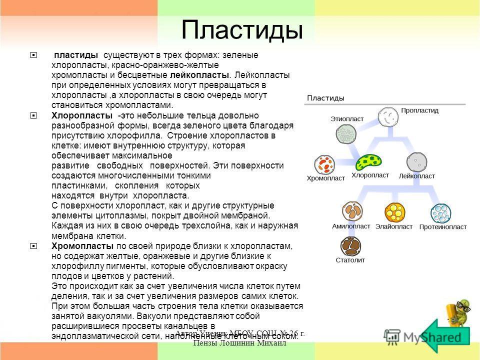Пластиды пластиды существуют в трех формах: зеленые хлоропласты, красно-оранжево-желтые хромопласты и бесцветные лейкопласты. Лейкопласты при определенных условиях могут превращаться в хлоропласты,а хлоропласты в свою очередь могут становиться хромоп