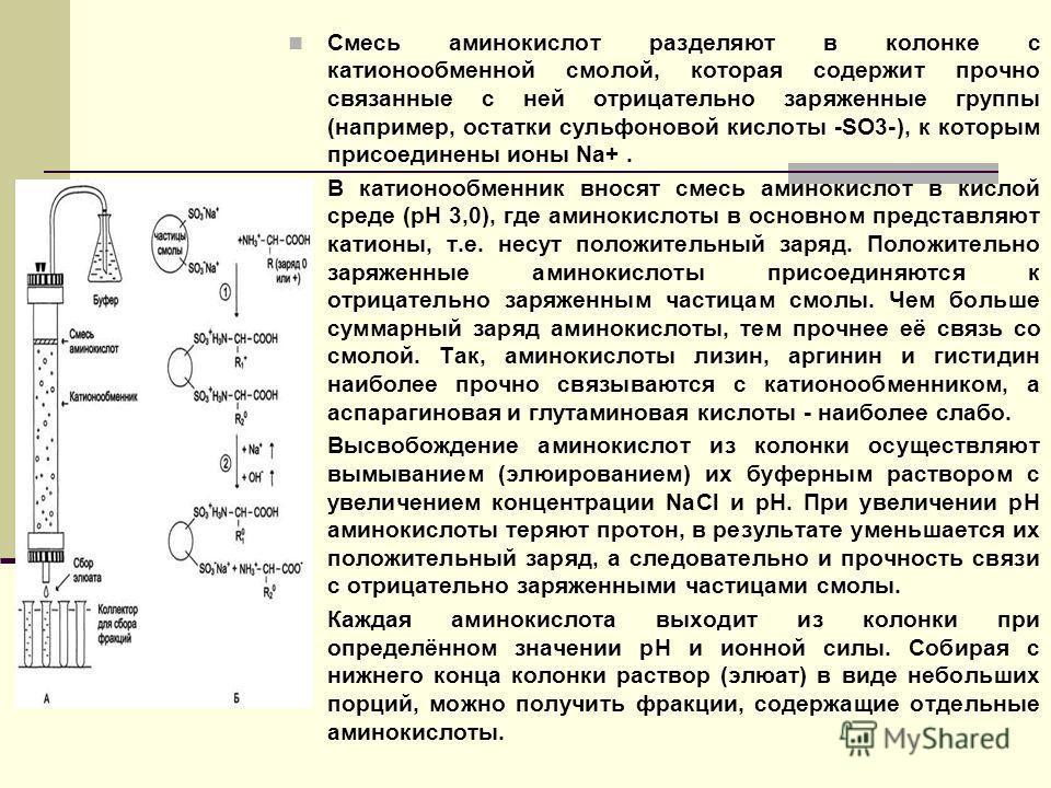 Смесь аминокислот разделяют в колонке с катионообменной смолой, которая содержит прочно связанные с ней отрицательно заряженные группы (например, остатки сульфоновой кислоты -SO3-), к которым присоединены ионы Na+. В катионообменник вносят смесь амин