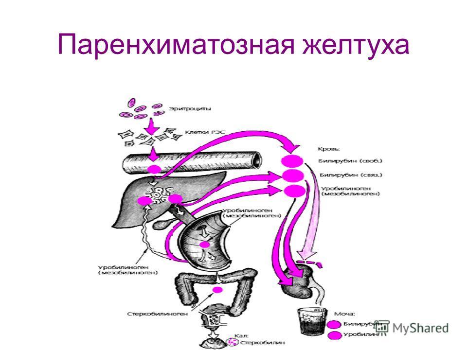 Паренхиматозная желтуха