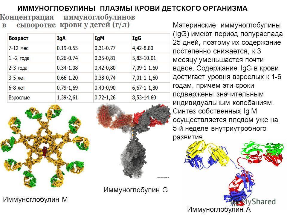Материнские иммуноглобулины (IgG) имеют период полураспада 25 дней, поэтому их содержание постепенно снижается, к 3 месяцу уменьшается почти вдвое. Содержание IgG в крови достигает уровня взрослых к 1-6 годам, причем эти сроки подвержены значительным