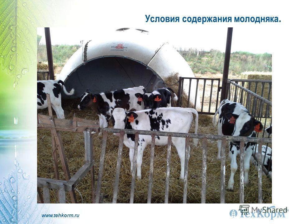 www.tehkorm.ru Условия содержания молодняка.