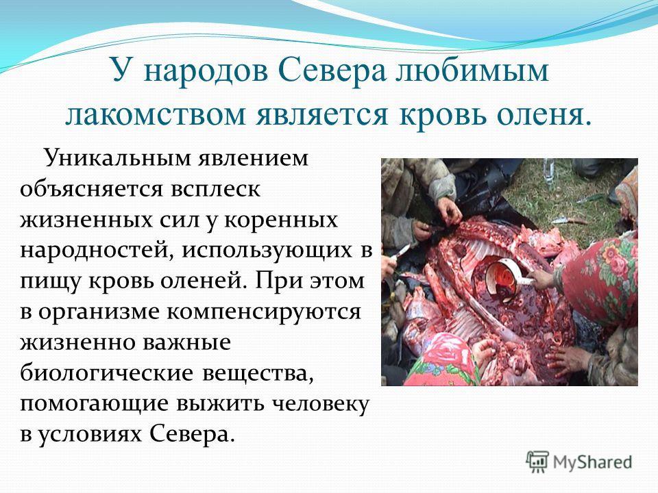 У народов Севера любимым лакомством является кровь оленя. Уникальным явлением объясняется всплеск жизненных сил у коренных народностей, использующих в пищу кровь оленей. При этом в организме компенсируются жизненно важные биологические вещества, помо