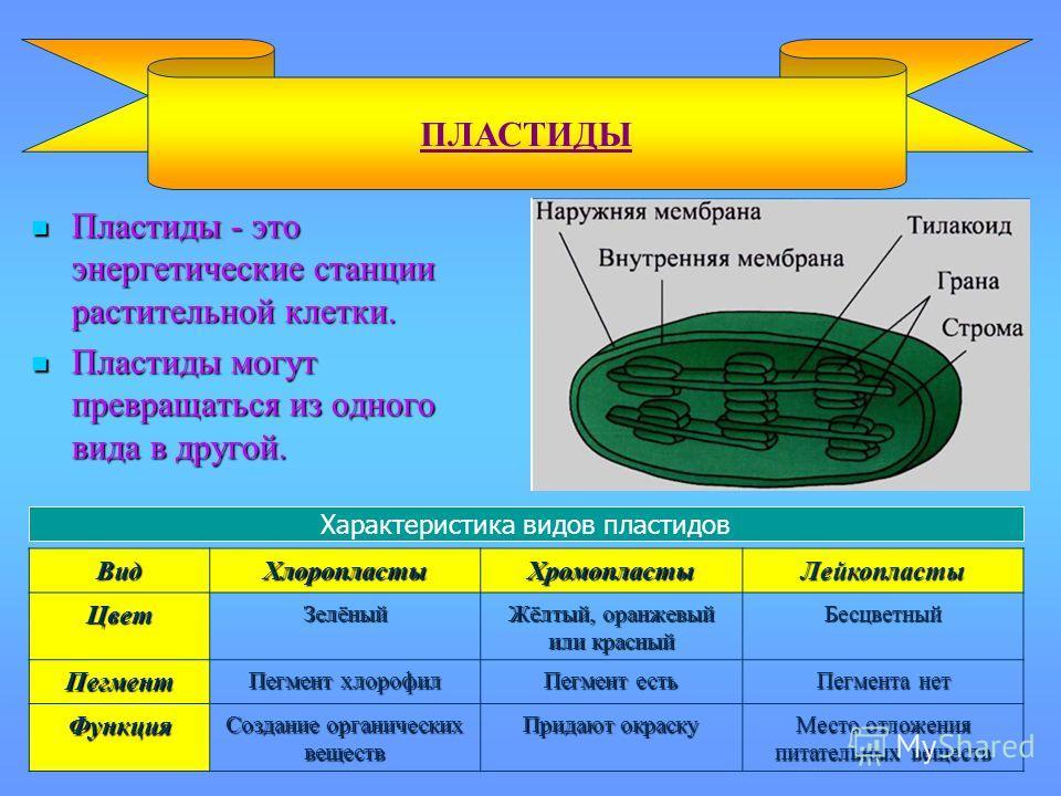 Пластиды - это энергетические станции растительной клетки. Пластиды - это энергетические станции растительной клетки. Пластиды могут превращаться из одного вида в другой. Пластиды могут превращаться из одного вида в другой. ПЛАСТИДЫВид ХлоропластыХро
