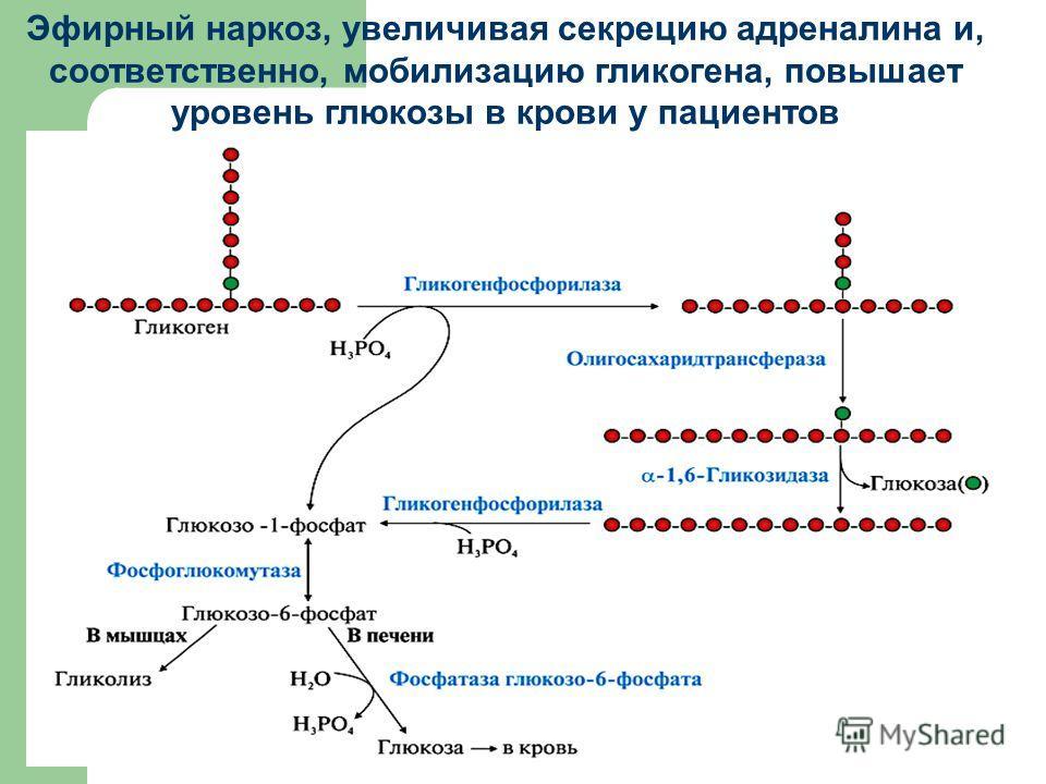 Эфирный наркоз, увеличивая секрецию адреналина и, соответственно, мобилизацию гликогена, повышает уровень глюкозы в крови у пациентов