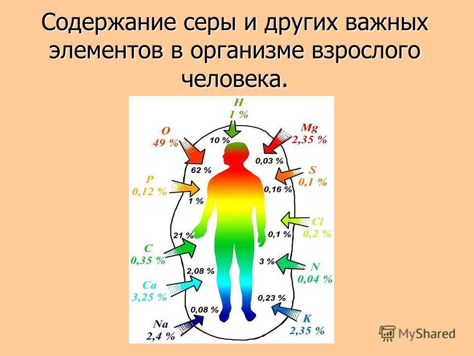 Содержание серы и других важных элементов в организме взрослого человека.