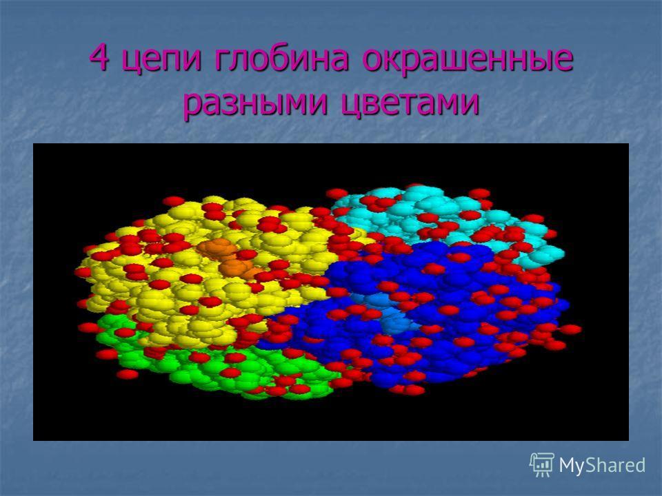 4 цепи глобина окрашенные разными цветами