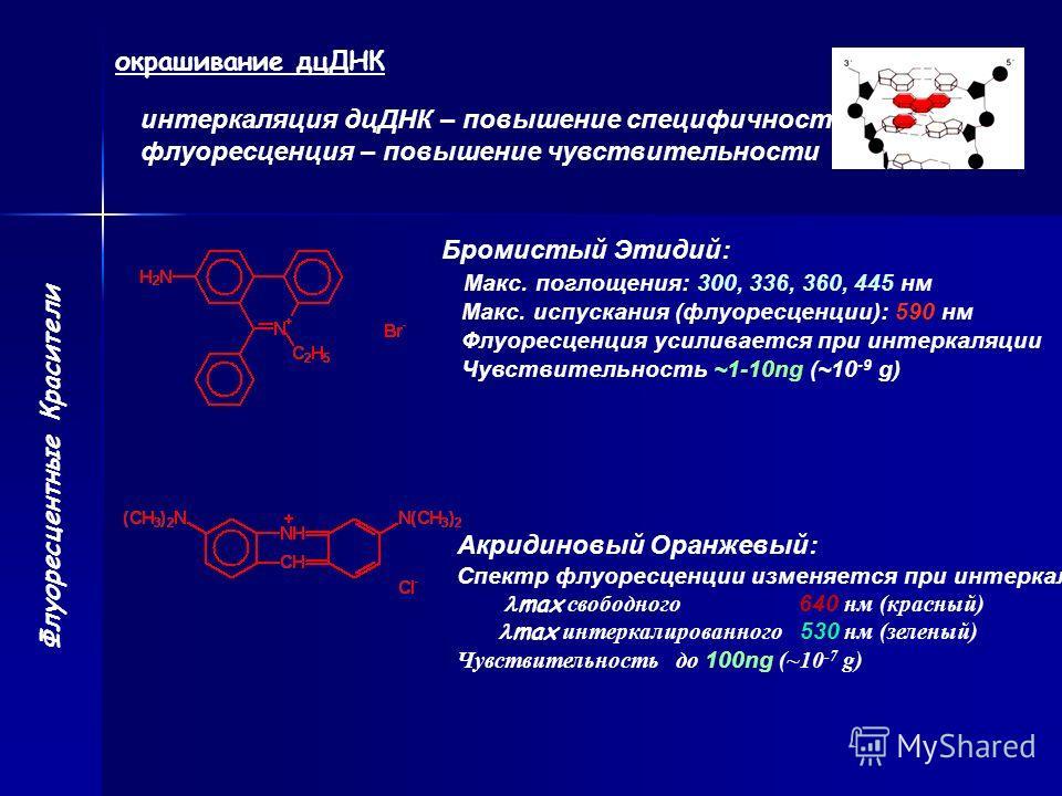 Флуоресцентные Красители окрашивание дцДНК интеркаляция дцДНК – повышение специфичности флуоресценция – повышение чувствительности Бромистый Этидий: Макс. поглощения: 300, 336, 360, 445 нм Макс. испускания (флуоресценции): 590 нм Флуоресценция усилив
