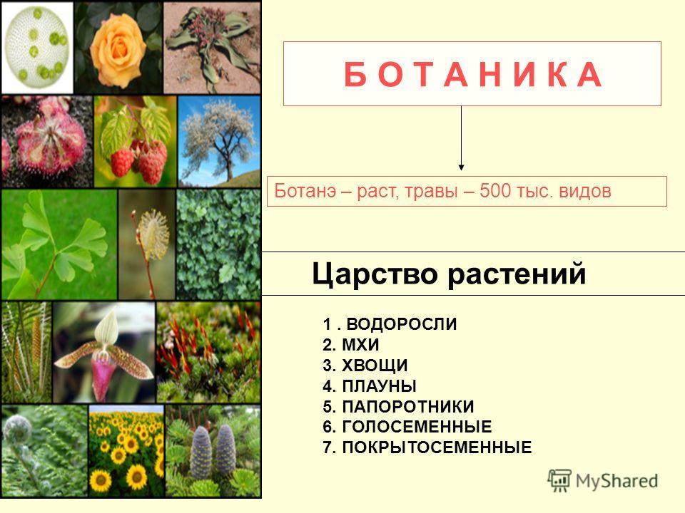 Б О Т А Н И К А Ботанэ – раст, травы – 500 тыс. видов Царство растений 1. ВОДОРОСЛИ 2. МХИ 3. ХВОЩИ 4. ПЛАУНЫ 5. ПАПОРОТНИКИ 6. ГОЛОСЕМЕННЫЕ 7. ПОКРЫТОСЕМЕННЫЕ