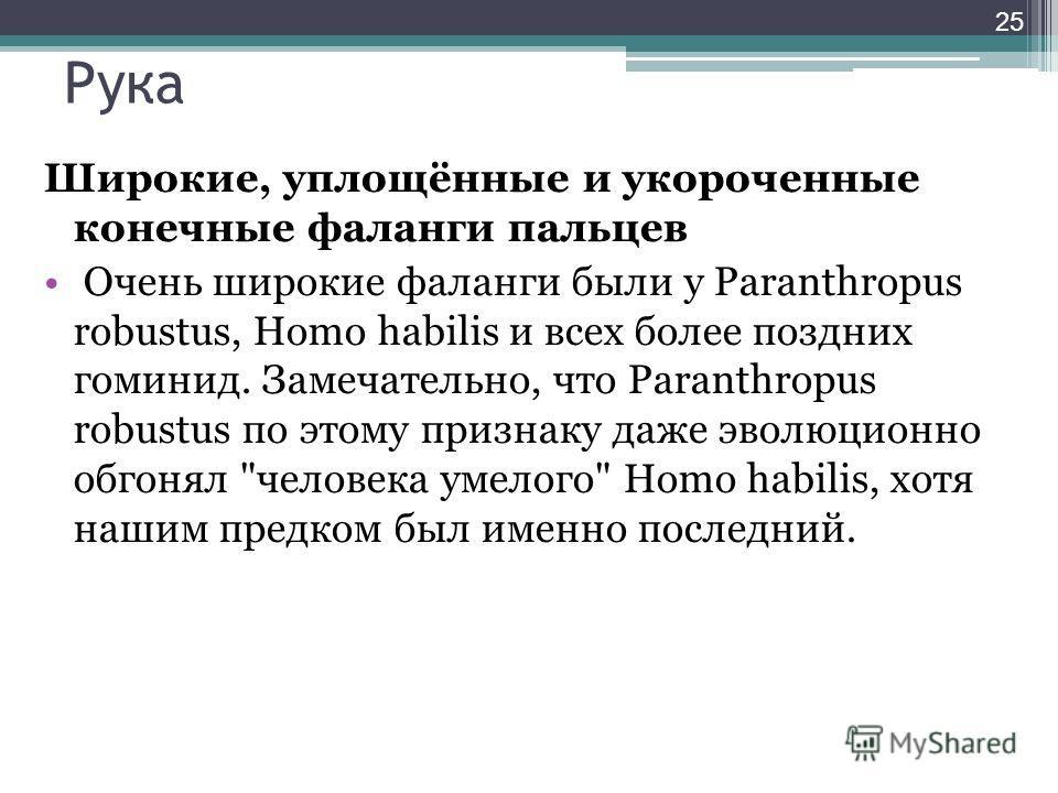 Рука Широкие, уплощённые и укороченные конечные фаланги пальцев Очень широкие фаланги были у Paranthropus robustus, Homo habilis и всех более поздних гоминид. Замечательно, что Paranthropus robustus по этому признаку даже эволюционно обгонял