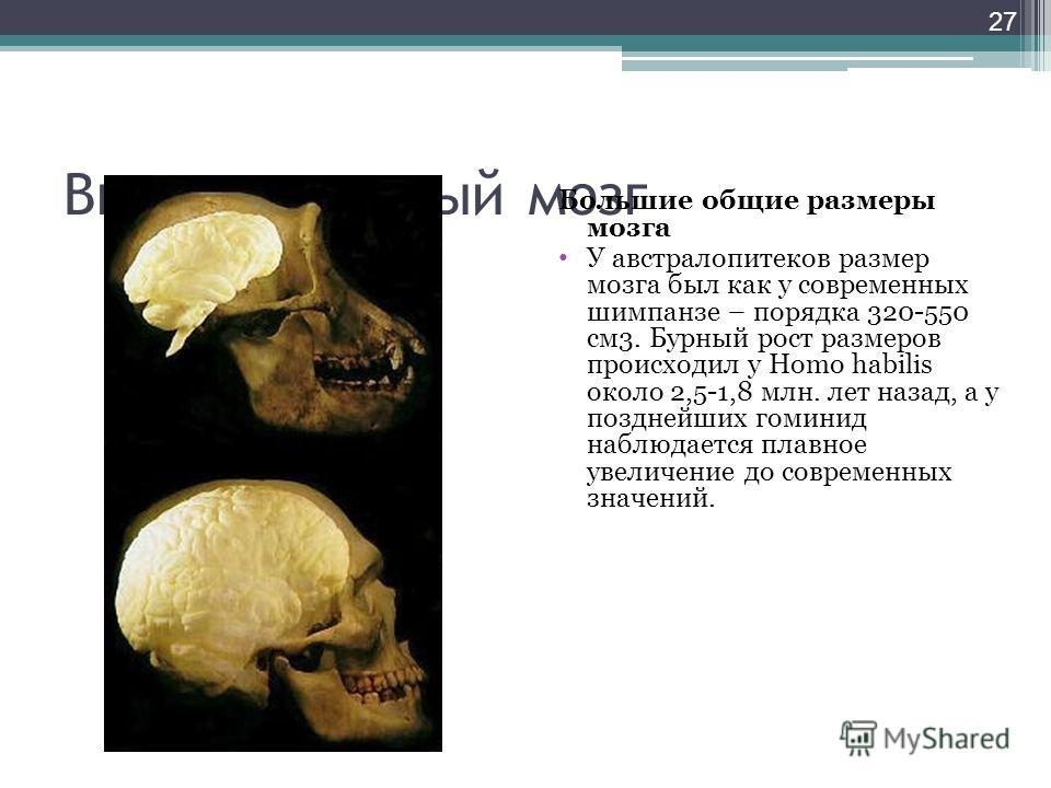 Высокоразвитый мозг Большие общие размеры мозга У австралопитеков размер мозга был как у современных шимпанзе – порядка 320-550 см 3. Бурный рост размеров происходил у Homo habilis около 2,5-1,8 млн. лет назад, а у позднейших гоминид наблюдается плав