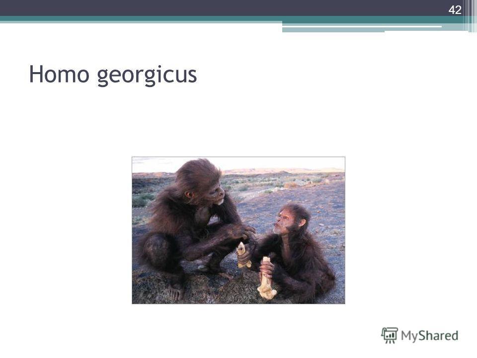 Homo georgicus 42