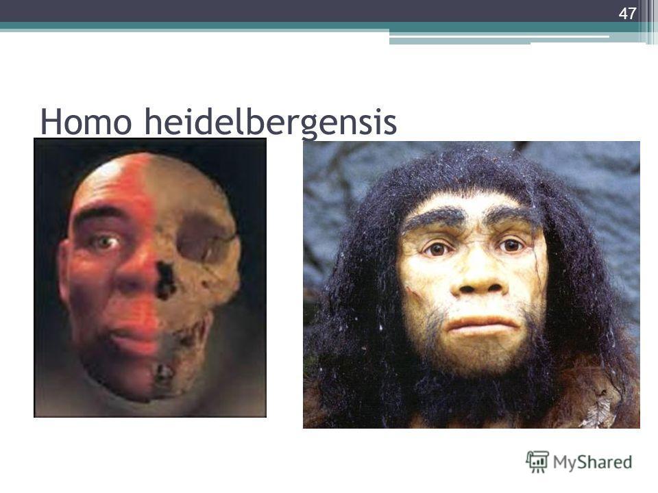 Homo heidelbergensis 47