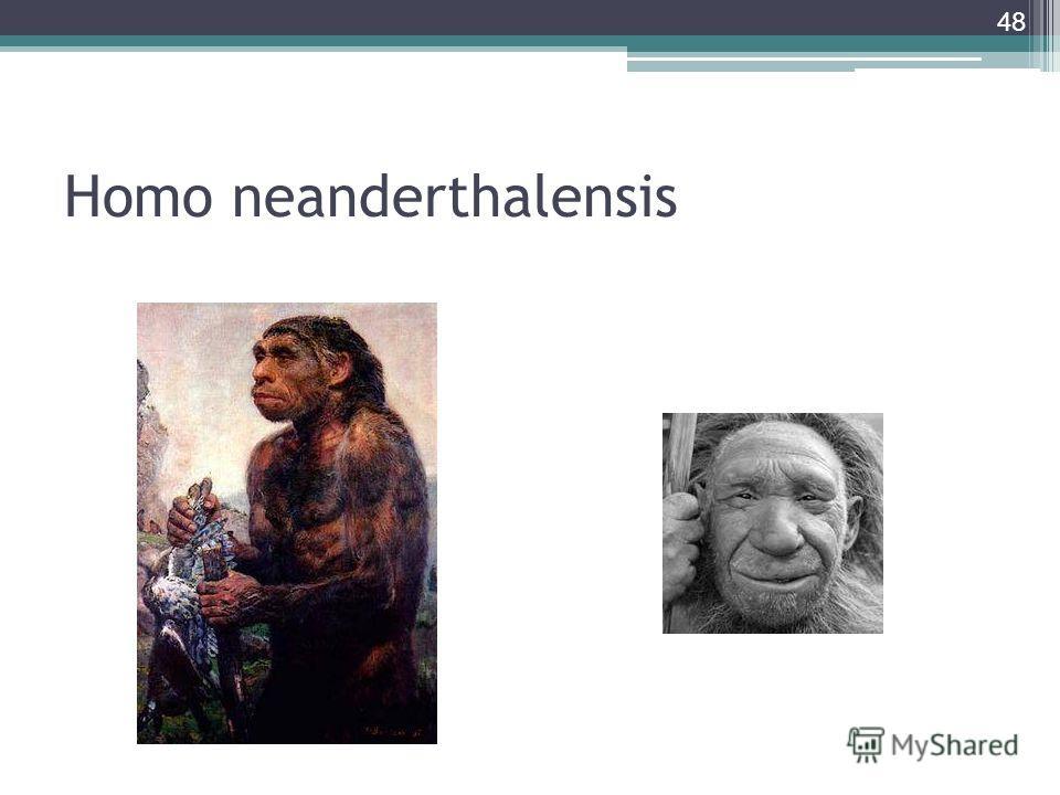 Homo neanderthalensis 48