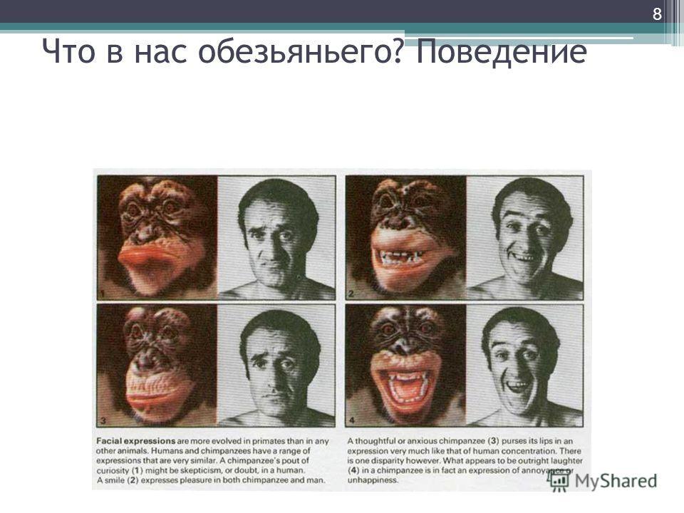 Что в нас обезьяньего? Поведение 8