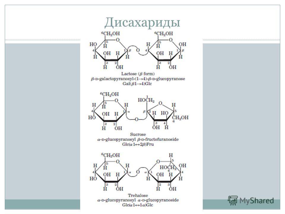 Дисахариды