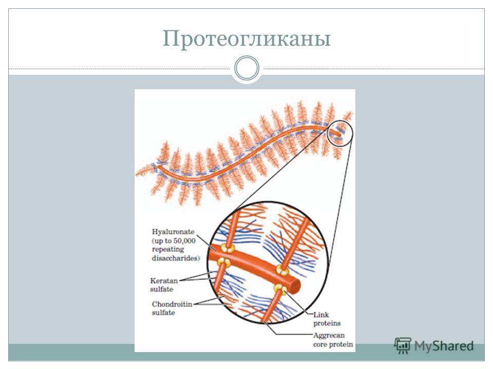 Протеогликаны