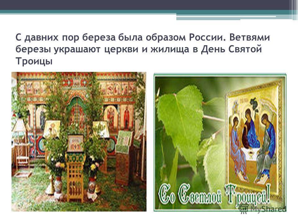 С давних пор береза была образом России. Ветвями березы украшают церкви и жилища в День Святой Троицы