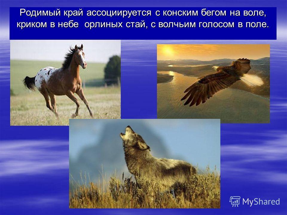 Родимый край ассоциируется с конским бегом на воле, криком в небе орлиных стай, с волчьим голосом в поле.