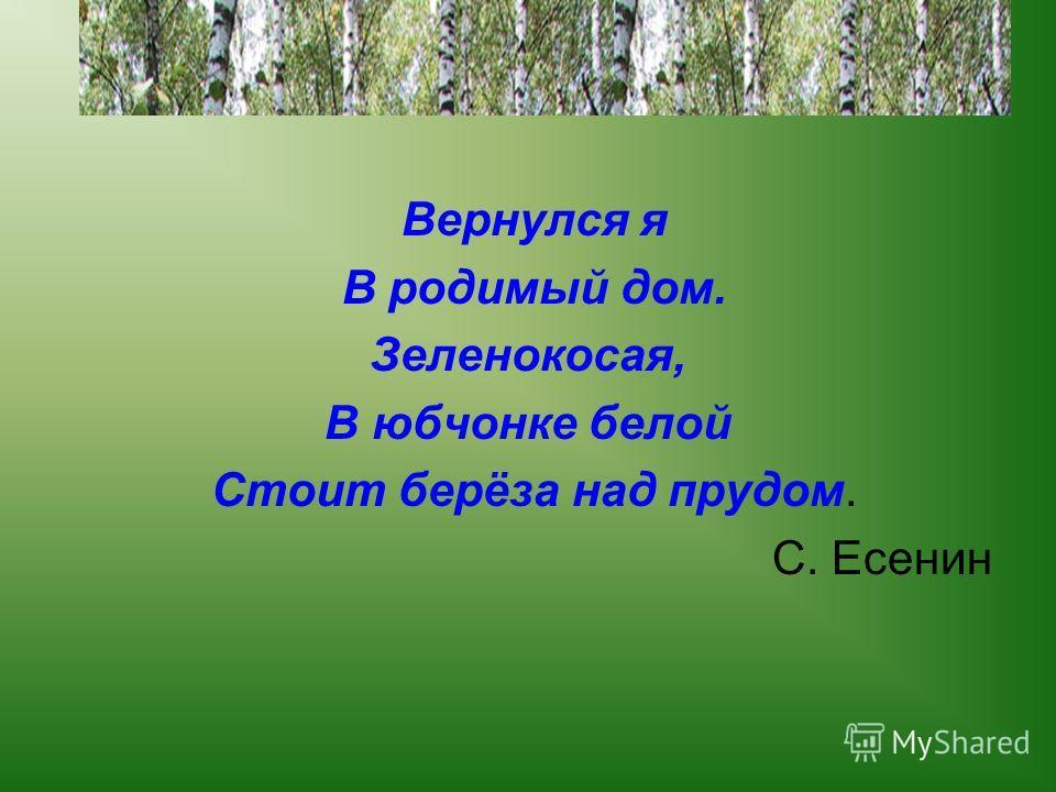 Вернулся я В родимый дом. Зеленокосая, В юбчонке белой Стоит берёза над прудом. С. Есенин