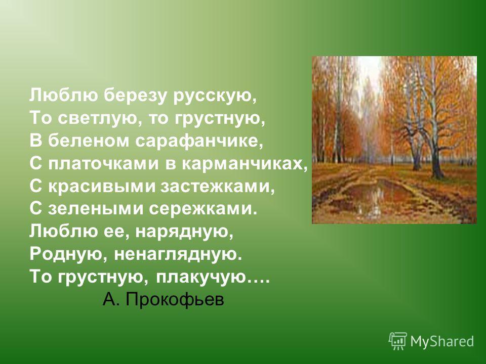 Люблю березу русскую, То светлую, то грустную, В беленом сарафанчике, С платочками в карманчиках, С красивыми застежками, С зелеными сережками. Люблю ее, нарядную, Родную, ненаглядную. То грустную, плакучую…. А. Прокофьев