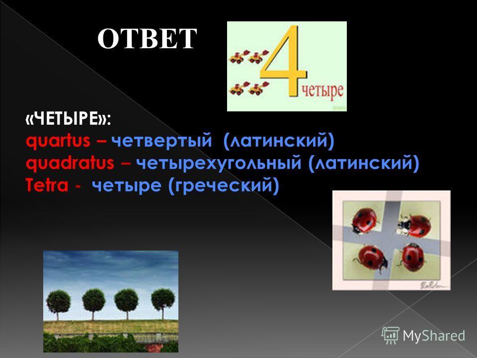 ОТВЕТ «ЧЕТЫРЕ»: quartus – четвертый (латинский) quadratus – четырехугольный (латинский) Tetra - четыре (греческий)