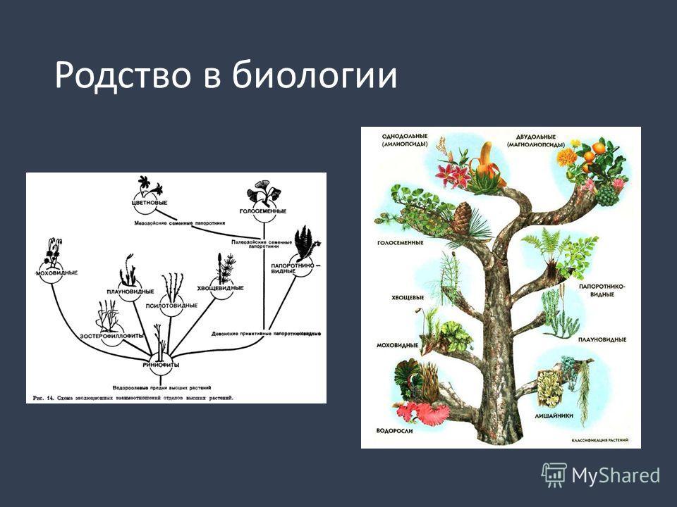 Родство в биологии