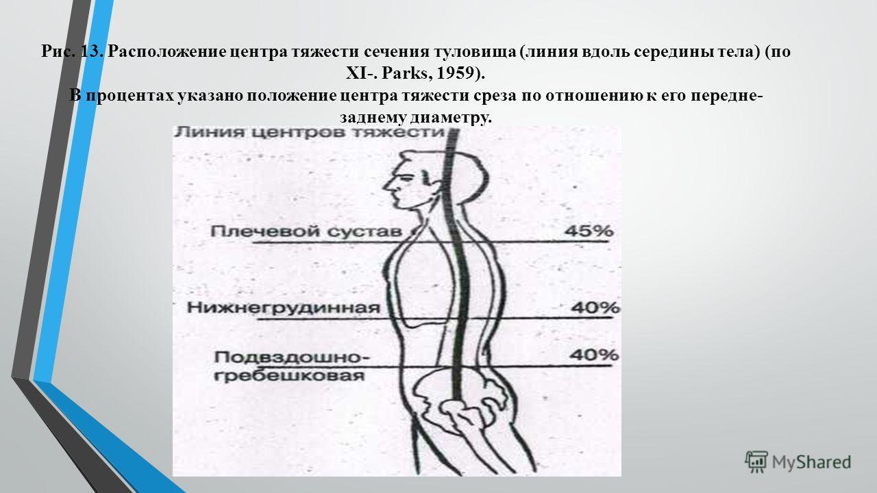 Рис. 13. Расположение центра тяжести сечения туловища (линия вдоль середины тела) (по XI-. Раrks, 1959). В процентах указано положение центра тяжести среза по отношению к его передне- заднему диаметру.