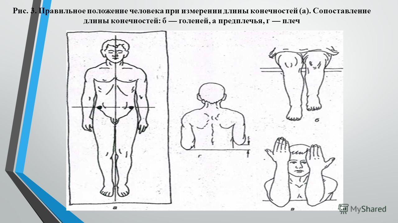 Рис. 3. Правильное положение человека при измерении длины конечностей (а). Сопоставление длины конечностей: б голеней, а предплечья, г плеч