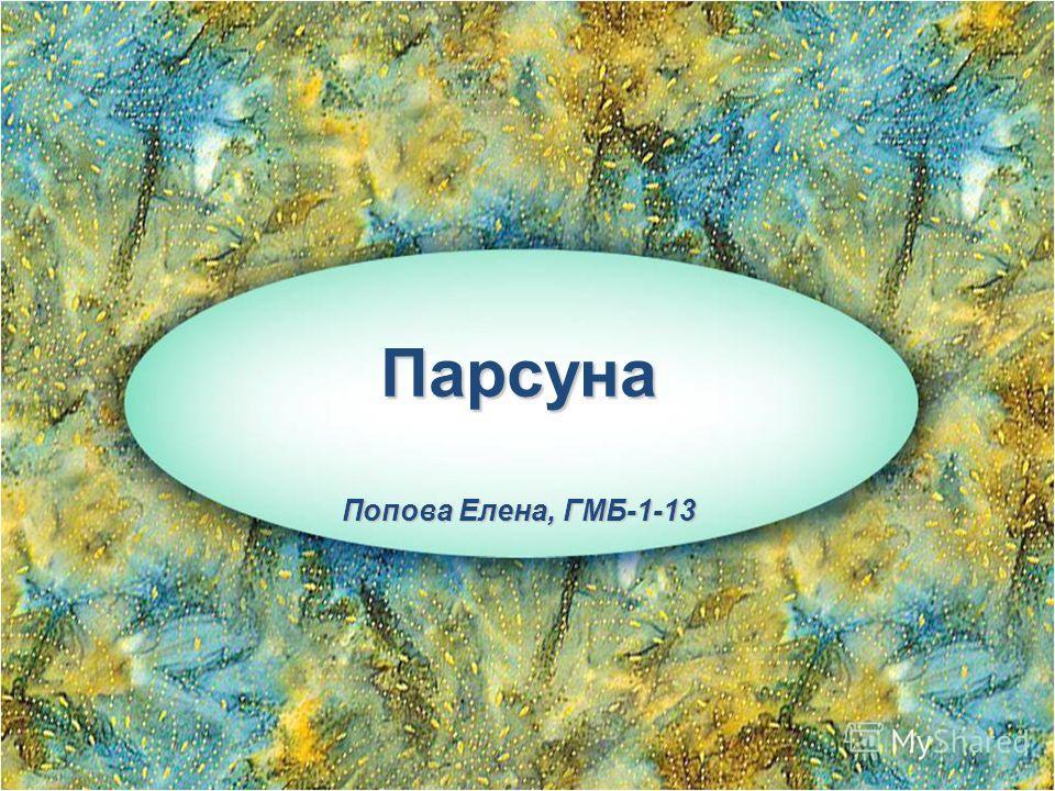 Парсуна Попова Елена, ГМБ-1-13