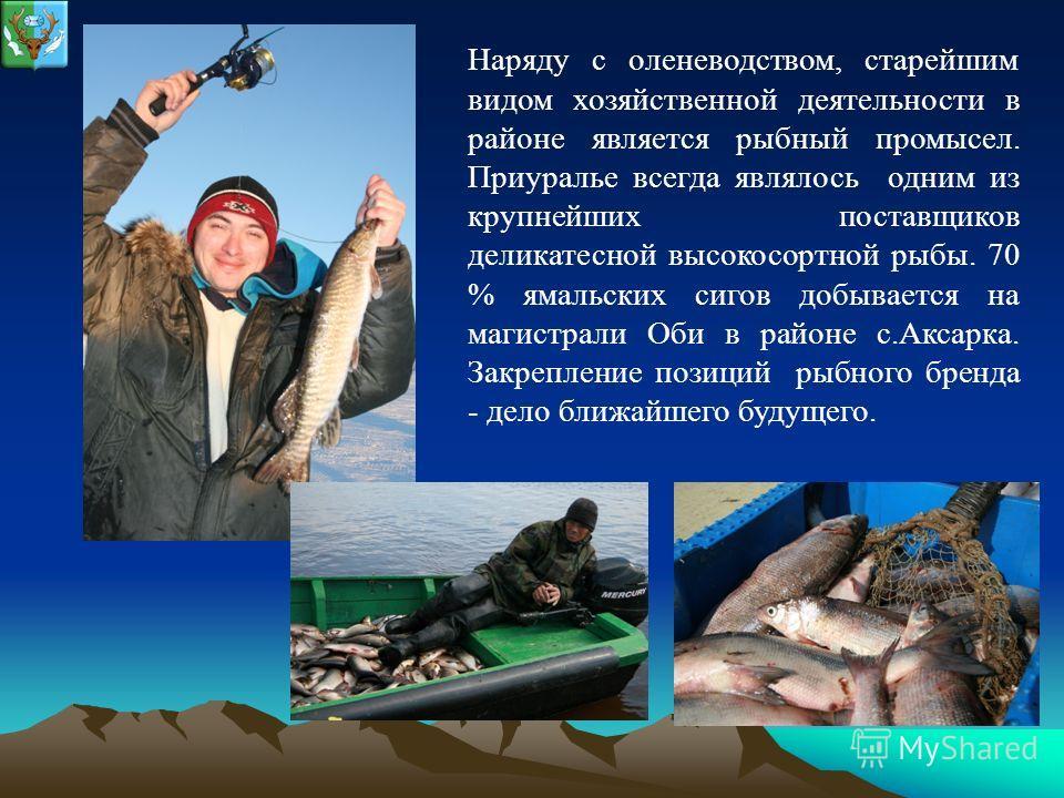 Наряду с оленеводством, старейшим видом хозяйственной деятельности в районе является рыбный промысел. Приуралье всегда являлось одним из крупнейших поставщиков деликатесной высокосортной рыбы. 70 % ямальских сигов добывается на магистрали Оби в район