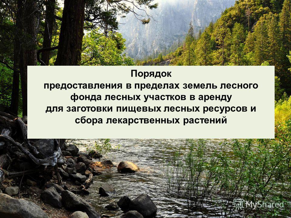 Порядок предоставления в пределах земель лесного фонда лесных участков в аренду для заготовки пищевых лесных ресурсов и сбора лекарственных растений