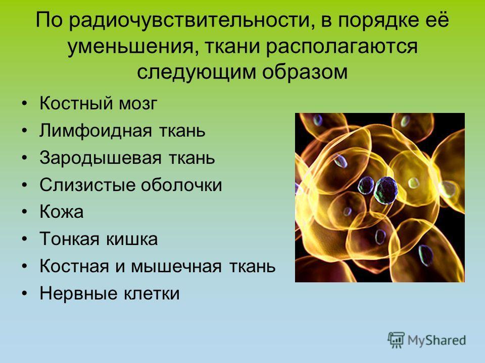 По радиочувствительности, в порядке её уменьшения, ткани располагаются следующим образом Костный мозг Лимфоидная ткань Зародышевая ткань Слизистые оболочки Кожа Тонкая кишка Костная и мышечная ткань Нервные клетки