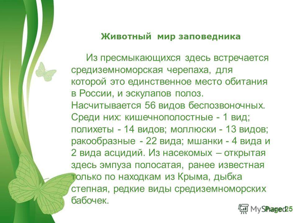 Free Powerpoint TemplatesPage 25 Животный мир заповедника Из пресмыкающихся здесь встречается средиземноморусская черепаха, для которой это единственное место обитания в России, и эскулапов полоз. Насчитывается 56 видов беспозвоночных. Среди них: киш