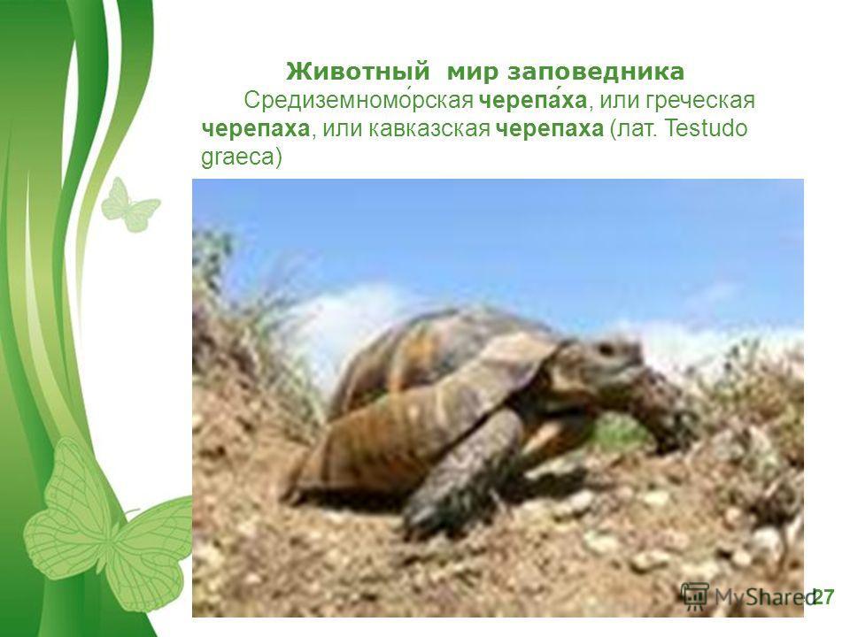 Free Powerpoint TemplatesPage 27 Животный мир заповедника Средиземномо́русская черепа́ха, или греческая черепаха, или кавказская черепаха (лат. Testudo graeca)