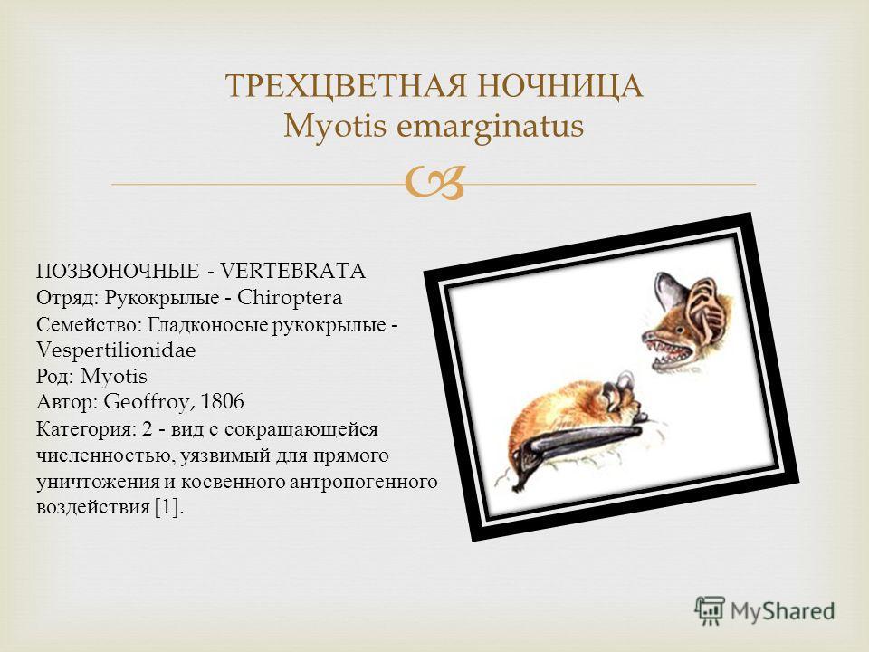 ТРЕХЦВЕТНАЯ НОЧНИЦА Myotis emarginatus ПОЗВОНОЧНЫЕ - VERTEBRATA Отряд : Рукокрылые - Chiroptera Семейство : Гладконосые рукокрылые - Vespertilionidae Род : Myotis Автор : Geoffroy, 1806 Категория : 2 - вид с сокращающейся численностью, уязвимый для п
