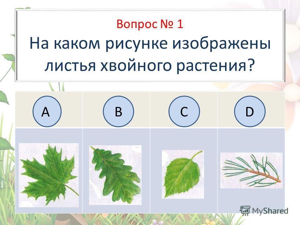 Вопрос 1 На каком рисунке изображены листья хвойного растения? АBC BCD