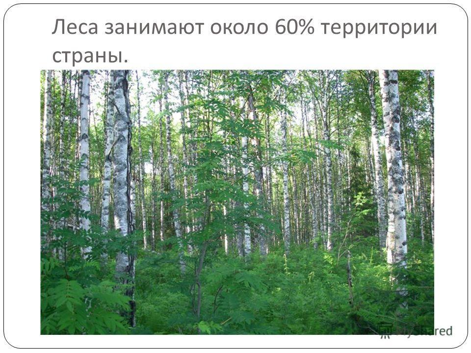 Леса занимают около 60% территории страны.