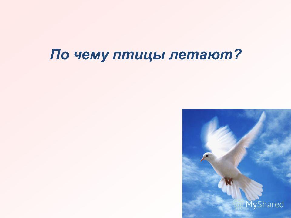 По чему птицы летают?