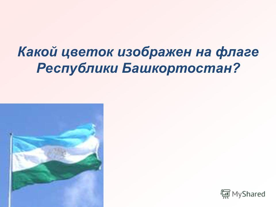 Какой цветок изображен на флаге Республики Башкортостан?
