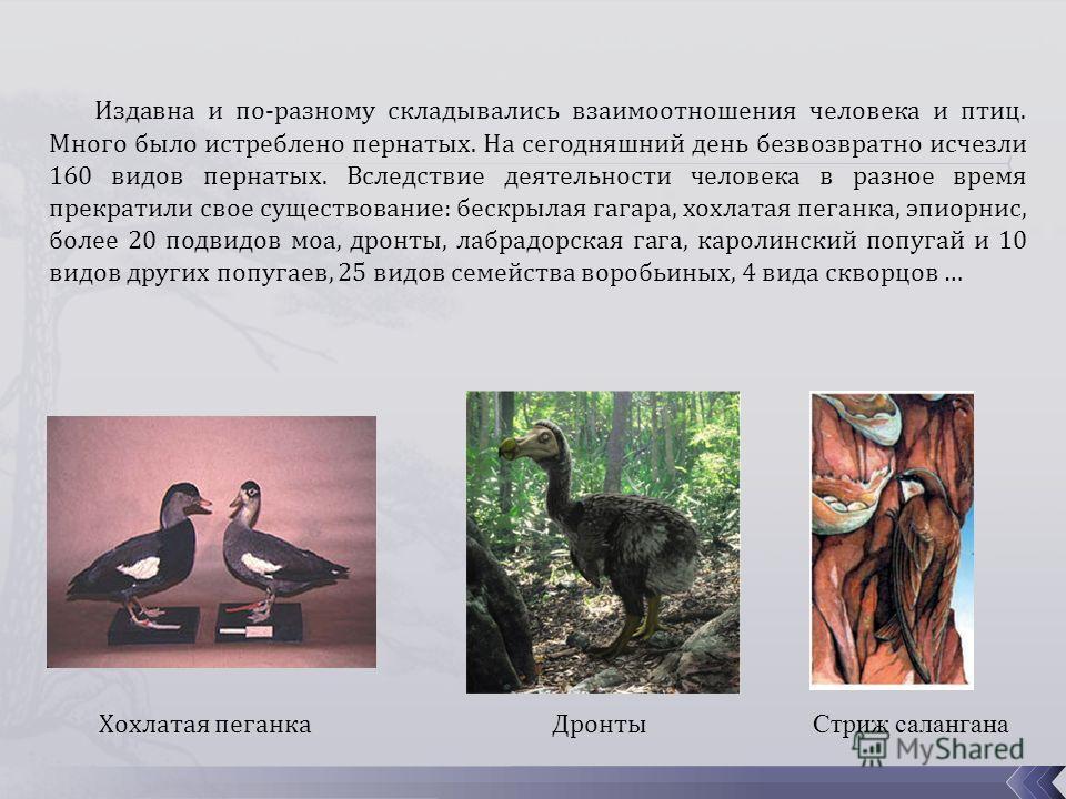 Издавна и по-разному складывались взаимоотношения человека и птиц. Много было истреблено пернатых. На сегодняшний день безвозвратно исчезли 160 видов пернатых. Вследствие деятельности человека в разное время прекратили свое существование: бескрылая г