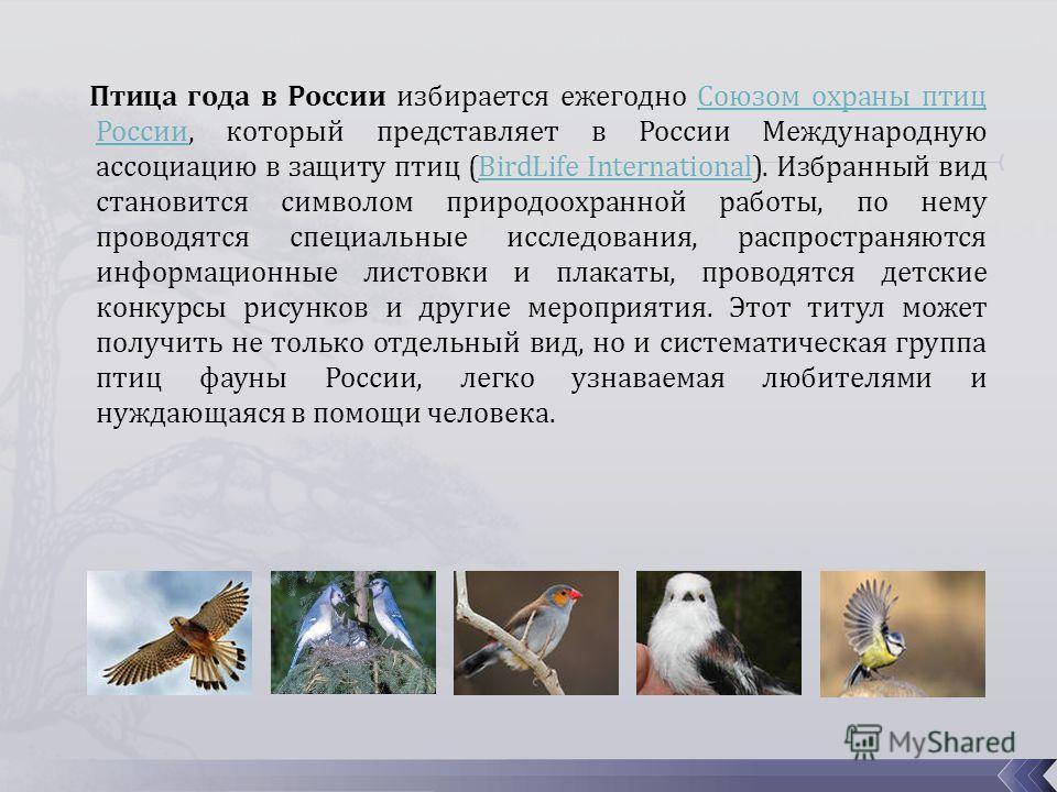 Птица года в России избирается ежегодно Союзом охраны птиц России, который представляет в России Международную ассоциацию в защиту птиц (BirdLife International). Избранный вид становится символом природоохранной работы, по нему проводятся специальные