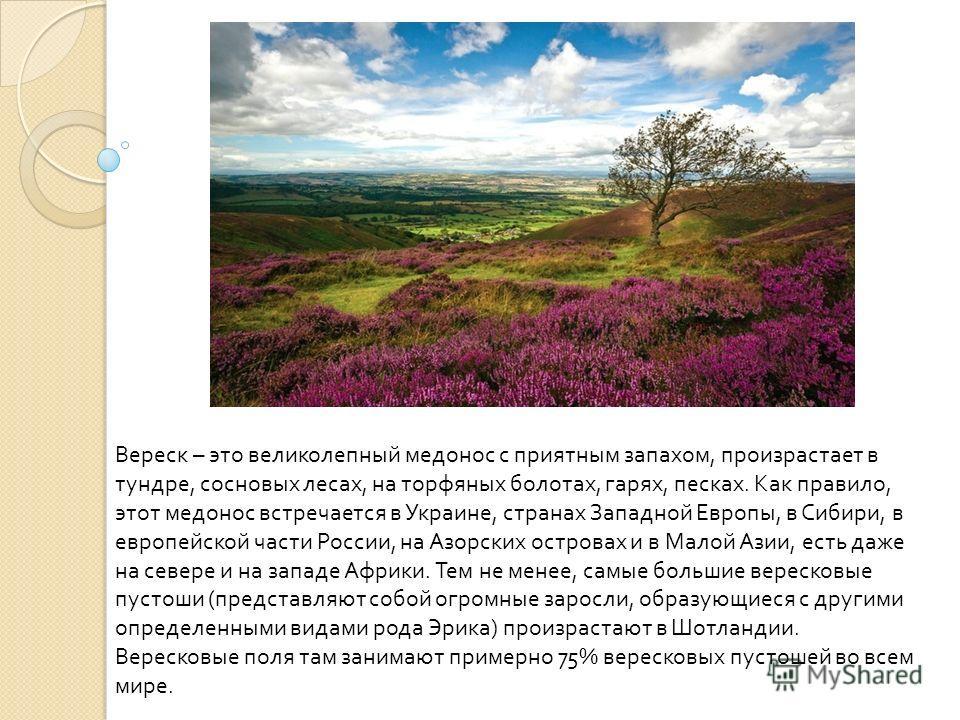 Вереск – это великолепный медонос с приятным запахом, произрастает в тундре, сосновых лесах, на торфяных болотах, гарях, песках. Как правило, этот медонос встречается в Украине, странах Западной Европы, в Сибири, в европейской части России, на Азорск