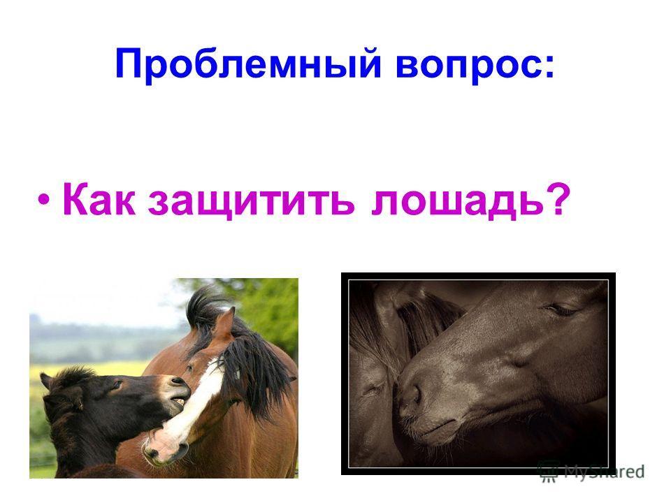 Проблемный вопрос: Как защитить лошадь?