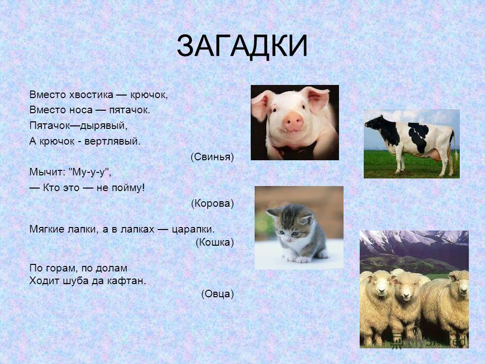 ЗАГАДКИ Вместо хвостика крючок, Вместо носа пятачок. Пятачокдырявый, А крючок - вертлявый. (Свинья) Мычит: Му-у-у, Кто это не пойму! (Корова) Мягкие лапки, а в лапках царапки. (Кошка) По горам, по долам Ходит шуба да кафтан. (Овца)