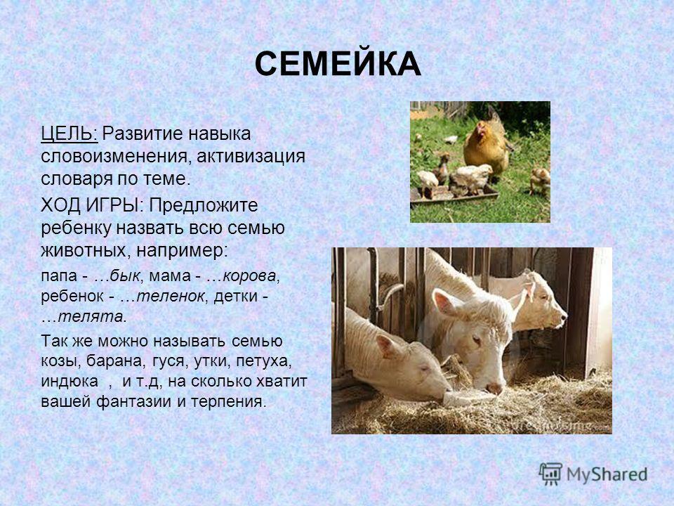 СЕМЕЙКА ЦЕЛЬ: Развитие навыка словоизменения, активизация словаря по теме. ХОД ИГРЫ: Предложите ребенку назвать всю семью животных, например: папа - …бык, мама - …корова, ребенок - …теленок, детки - …телята. Так же можно называть семью козы, барана,