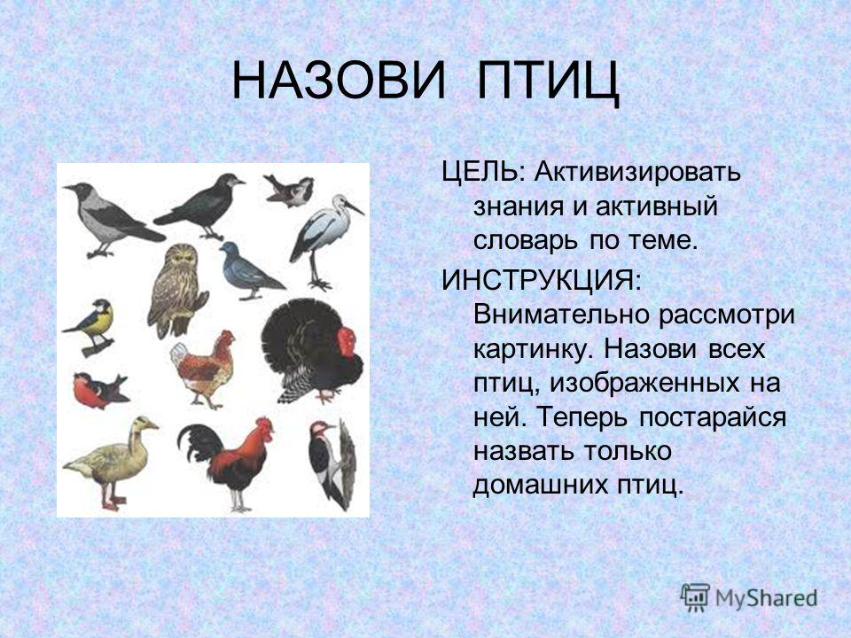 НАЗОВИ ПТИЦ ЦЕЛЬ: Активизировать знания и активный словарь по теме. ИНСТРУКЦИЯ: Внимательно рассмотри картинку. Назови всех птиц, изображенных на ней. Теперь постарайся назвать только домашних птиц.
