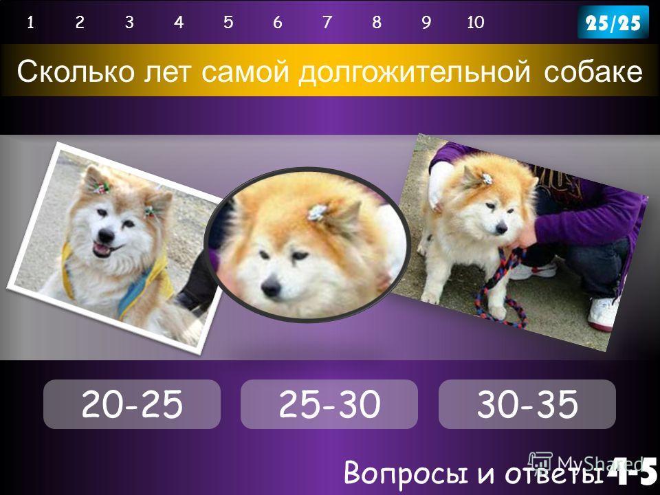 Вопросы и ответы 4-5 12345678910 Сколько лет самой долгожительной собаке 25/25 20-2525-3030-35
